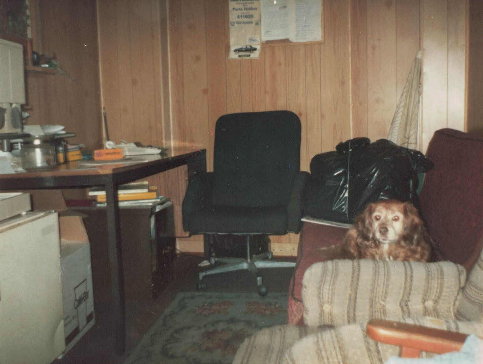 Sheeba in the office at Lindsay Avenue, High Wycombe - circa 1985